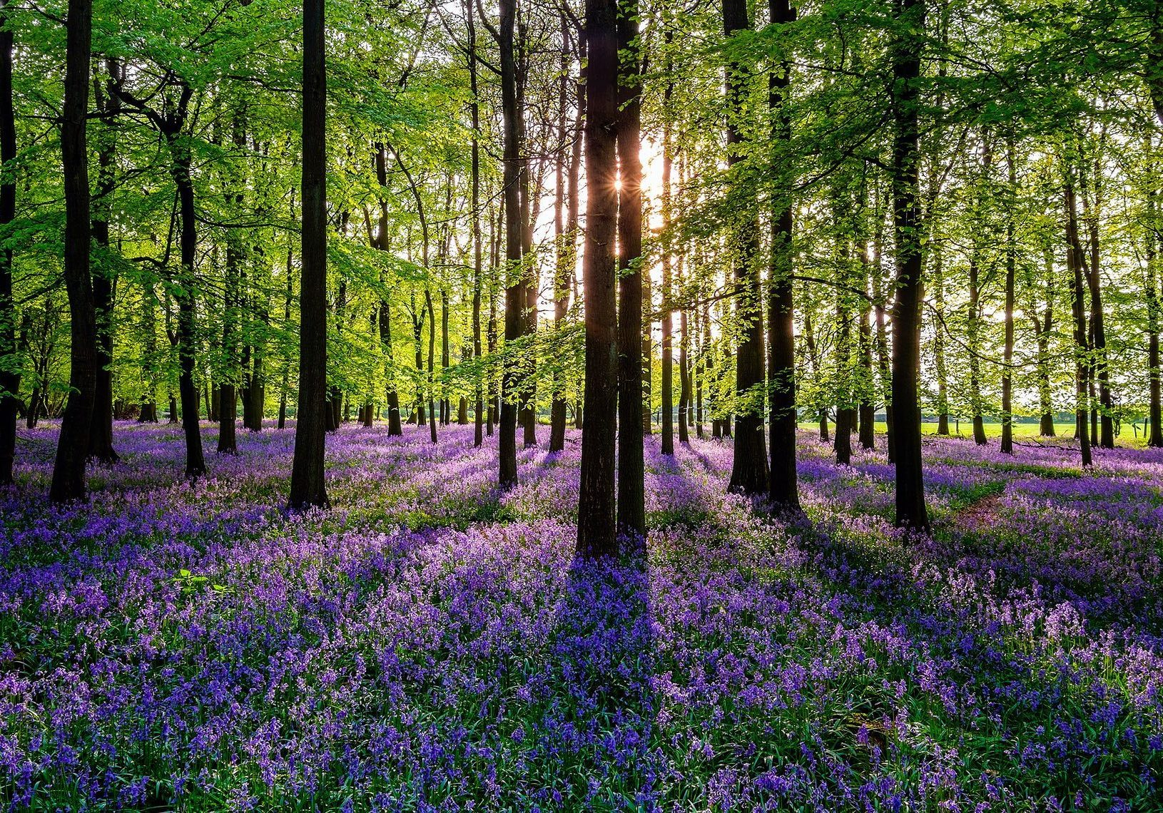 Spring-Flowers-Five-The-Horseshoes-Oxfordshire-UK-The-Guardian-